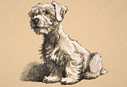 Domestic Animals Pastels - Sealyham by Cecil Charles Windsor Aldin