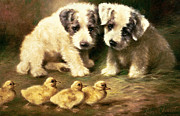 Ducklings Prints - Sealyham Puppies and Ducklings Print by Lilian Cheviot