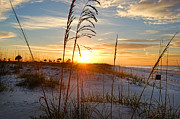 Michael Thomas Framed Prints - Seaoats Sunrise Framed Print by Michael Thomas