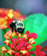 Gardens And Flowers - Searching for Food by Crystal Wightman