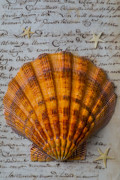 Handwritten Framed Prints - Seashell and words Framed Print by Garry Gay