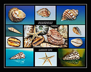 Old Shells Prints - Seashell Collection 2 Print by Kaye Menner