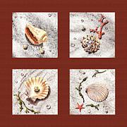 Seashell Collection Iv Print by Irina Sztukowski