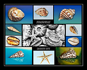 Shellscape Posters - Seashell Collection Poster by Kaye Menner
