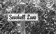 Seashell Art Prints - Seashell Lane Print by Michelle Wiarda