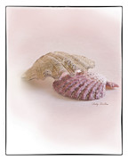 Sea Shell Digital Art Posters - Seashell Love Poster by Betty LaRue