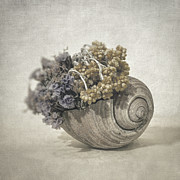 Spiral Photos - Seashell nO.2 by Taylan Soyturk