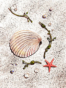 Seashell Fine Art Painting Prints - Seashell Sea Star And Pearls On The Beach Print by Irina Sztukowski