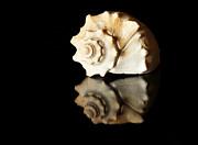 Seashell Print by Tawnya Apuan