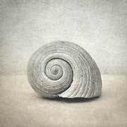 Muted Framed Prints - Seashell Framed Print by Taylan Soyturk