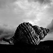 Seashell Without The Sea 2 Print by Bob Orsillo