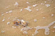 Bubbles In Water Posters - Seashells and Bubbles Poster by Kaye Menner