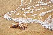 Shell Art Metal Prints - Seashells and Lace Metal Print by Kaye Menner
