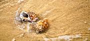 Seashells And Ripples Print by Kaye Menner