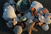 Suzanne Gaff - Seashells at Sunset I
