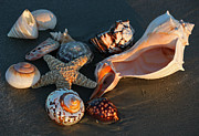 Suzanne Gaff - Seashells at Sunset