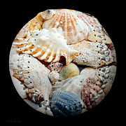 Baseball Art Digital Art Posters - Seashells Baseball Square Poster by Andee Photography