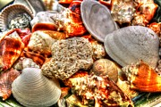 Seashell Art Prints - Seashells Print by Dan Stone