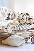 Basket Photo Posters - Seashells Poster by Elena Elisseeva