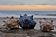 Jeka World Photography Posters - Seashells Poster by Jeka World Photography