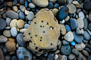 Pebbles Prints - Seashells Print by Robert Bales