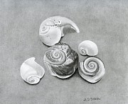 Seashell Drawings Metal Prints - Seashells Metal Print by Sarah Batalka