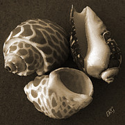 Brown Toned Art Digital Art Posters - Seashells Spectacular No 1 Poster by Ben and Raisa Gertsberg