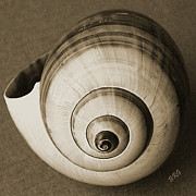 Sepia Toned - Seashells Spectacular No 25 by Ben and Raisa Gertsberg