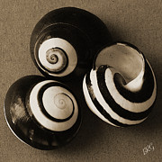 Black And White Digital Art Posters - Seashells Spectacular No 27 Poster by Ben and Raisa Gertsberg