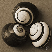 Black And White Photography Digital Art Metal Prints - Seashells Spectacular No 28 Metal Print by Ben and Raisa Gertsberg