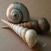 Spirals Digital Art Posters - Seashells Spectacular No 29  Poster by Ben and Raisa Gertsberg