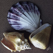 Seashell Fine Art Digital Art Prints - Seashells Spectacular No 30 Print by Ben and Raisa Gertsberg