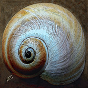 Spiral Digital Art Prints - Seashells Spectacular No 36 Print by Ben and Raisa Gertsberg