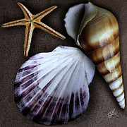 Seashell Fine Art Digital Art Prints - Seashells Spectacular No 37 Print by Ben and Raisa Gertsberg