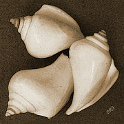 Beach Decor Digital Art Posters - Seashells Spectacular No 4 Poster by Ben and Raisa Gertsberg