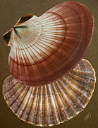Seashell Digital Art Digital Art Posters - Seashells Spectacular No 53 Poster by Ben and Raisa Gertsberg