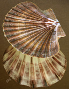 Sea Shell Digital Art Posters - Seashells Spectacular No 54 Poster by Ben and Raisa Gertsberg