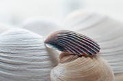 Terry DeLuco - Seashells