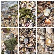 Beach Theme Framed Prints - Seashore Collage Framed Print by Carol Groenen