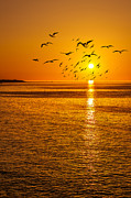 Svetlana Sewell - Seaside Birds