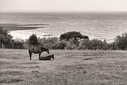 Peaceful Scene Photos - Seaside Horses by Olivier Le Queinec