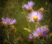 Aster  Digital Art - Seasons End by Barbara Chichester