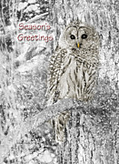 Snowy Holiday Card Posters - Seasons Greetings Card Winter Barred Owl Poster by Jennie Marie Schell