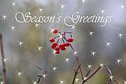 Christmas Greeting Photo Prints - Seasons Greetings Red Berries Print by Cathy  Beharriell