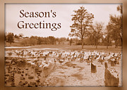 Winter Landscapes Metal Prints - Seasons Greetings - Winter Pond Metal Print by Carol Groenen