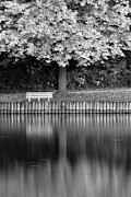Calm Water Reflection Photos - Seat in the Woods by Andrew Soundarajan