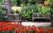 Park Benches Photo Originals - Seating Arrangement by Carolyn Fletcher