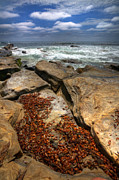 Seaweed Photos - Seaweed Cove by Peter Tellone