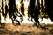 Abstracted Photo Metal Prints - Seaweed Dance Metal Print by Dean Harte