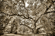Bill LITTELL - Secession Oak